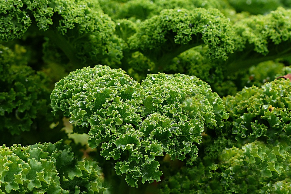 Kale Salad Linked To Salmonella Outbreak Food Poisoning Lawyers